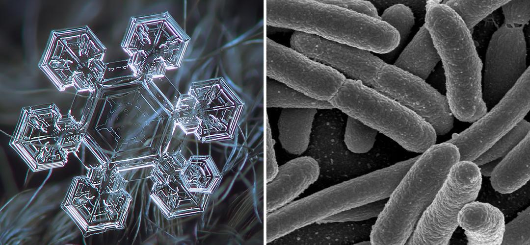 snow_microbe